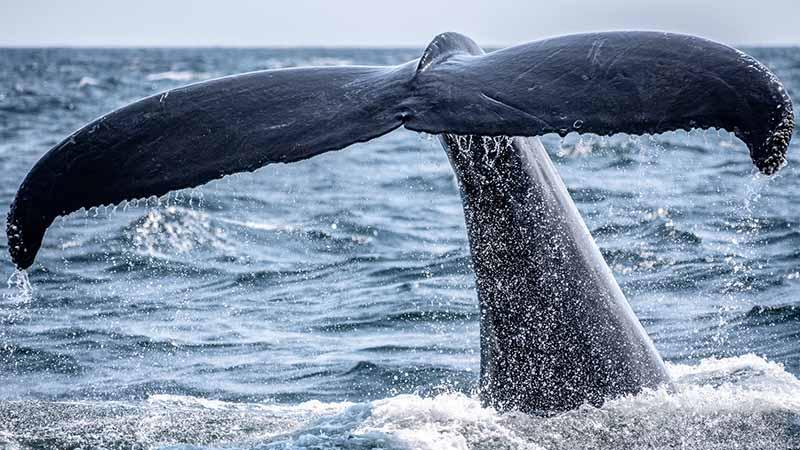 Wal und Delfin beobachtung auf Tenerifa - Sehenswürdigkeiten