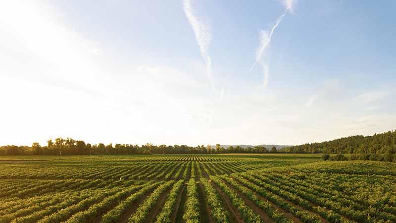 Das Farmleben kann dir zu deinem Dritten Work and Travel Visum verhelfen
