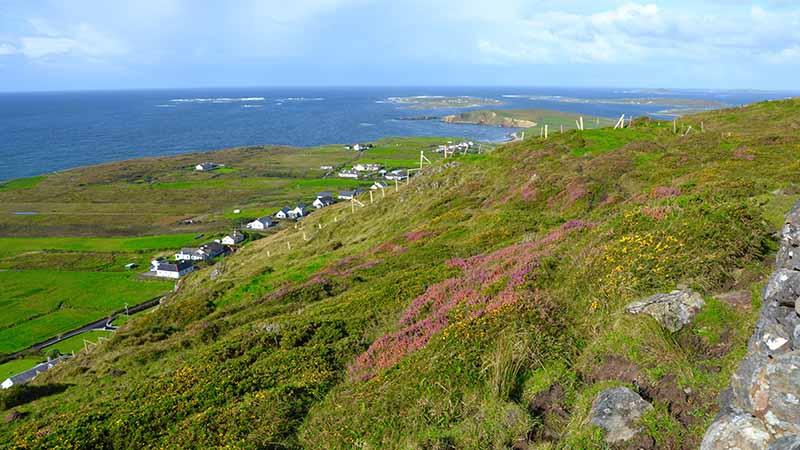 Irische Heidelandschaft an der Küste bei Galway