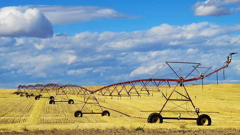 Die Arbeit in der Landwirtschaft ist eine Möglichkeit dein Covid-19 Visum zu beantragen.