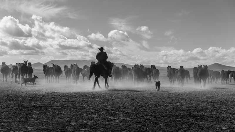 Cowboy Jobs in Australien sind ebenfalls möglich als Backpacker