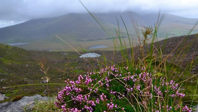Der Conor Pass auf dem Weg von Tralee zum Städtchen Dingle ist perfekt für einen Fotostopp oder eine kleine Wanderung