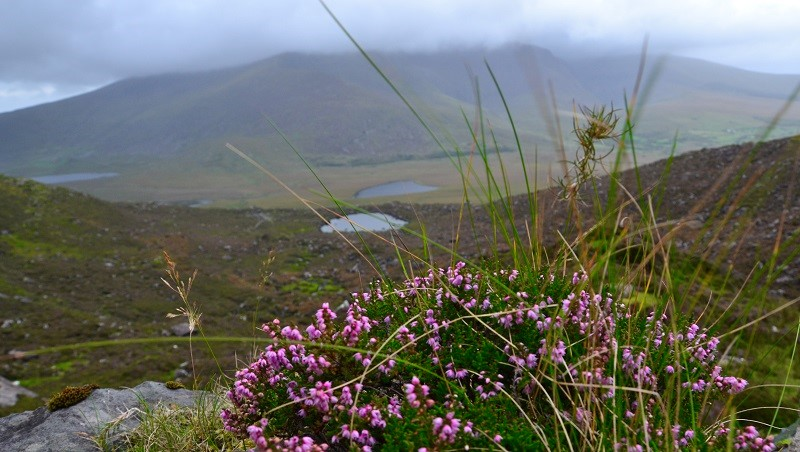 Conor Pass on the way from Tralee to the town of Dingle is perfect for a photo stop or a short hike
